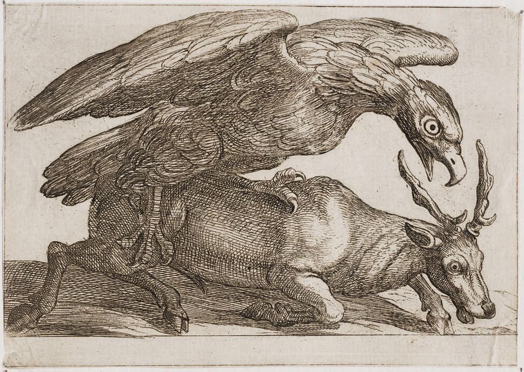 A Large Bird Attacking A Stag