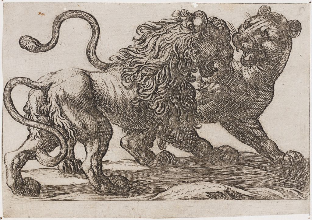 A Lion Fighting A Lioness
