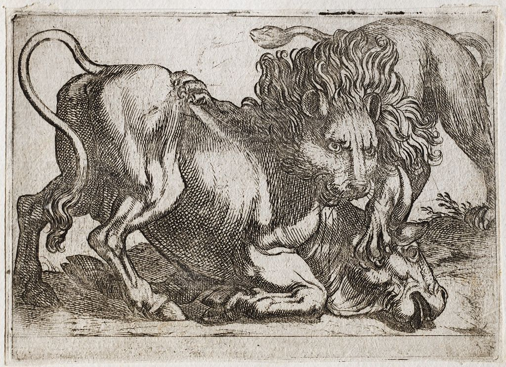 A Lion Attacking A Bull
