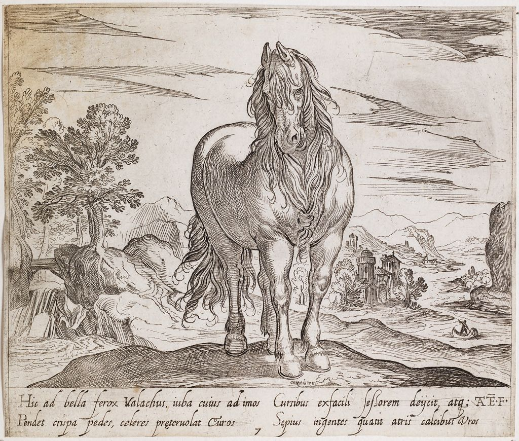 A Standing Horse, Viewed Frontally