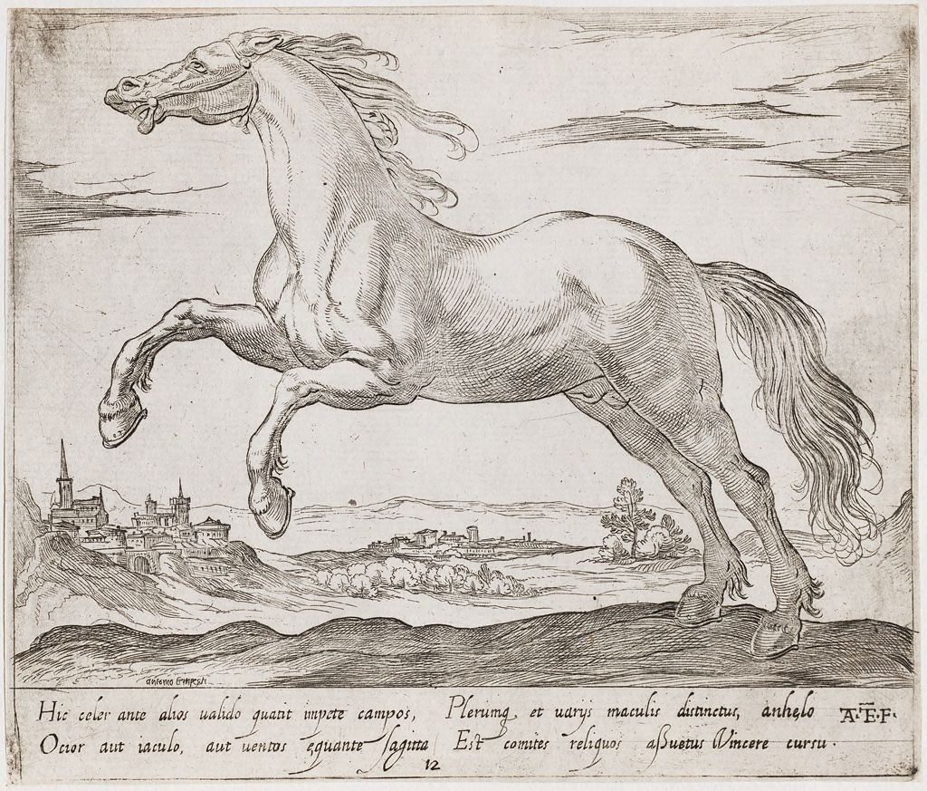 A Horse Galloping To The Left