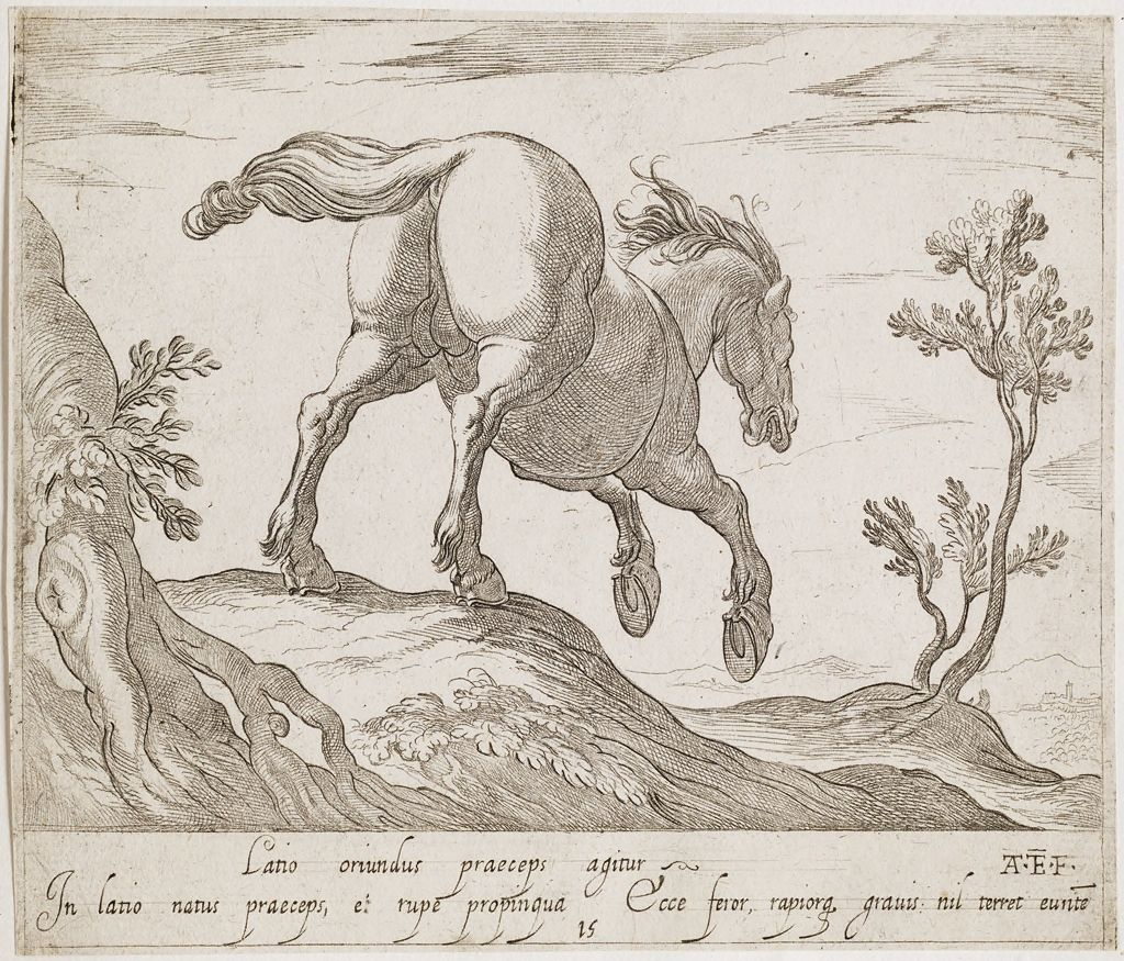 A Horse Running Down A Hill, Viewed From The Rear