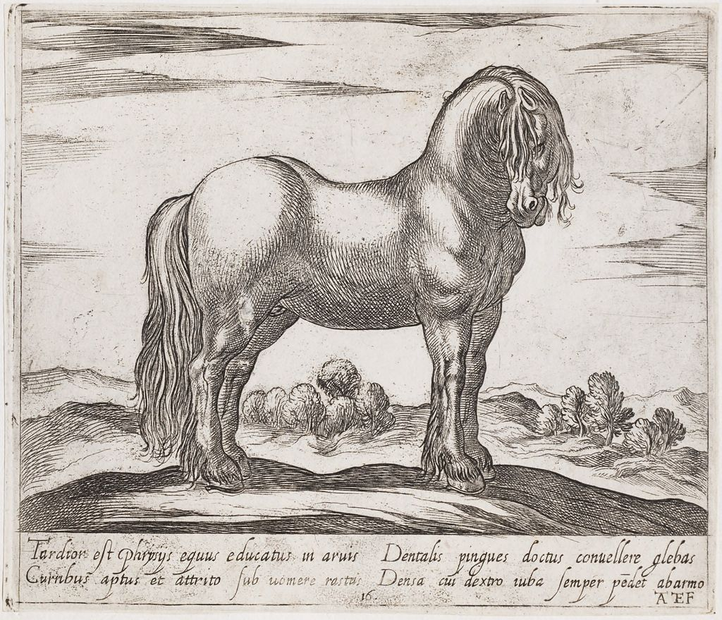 A Standing Horse, Facing Right