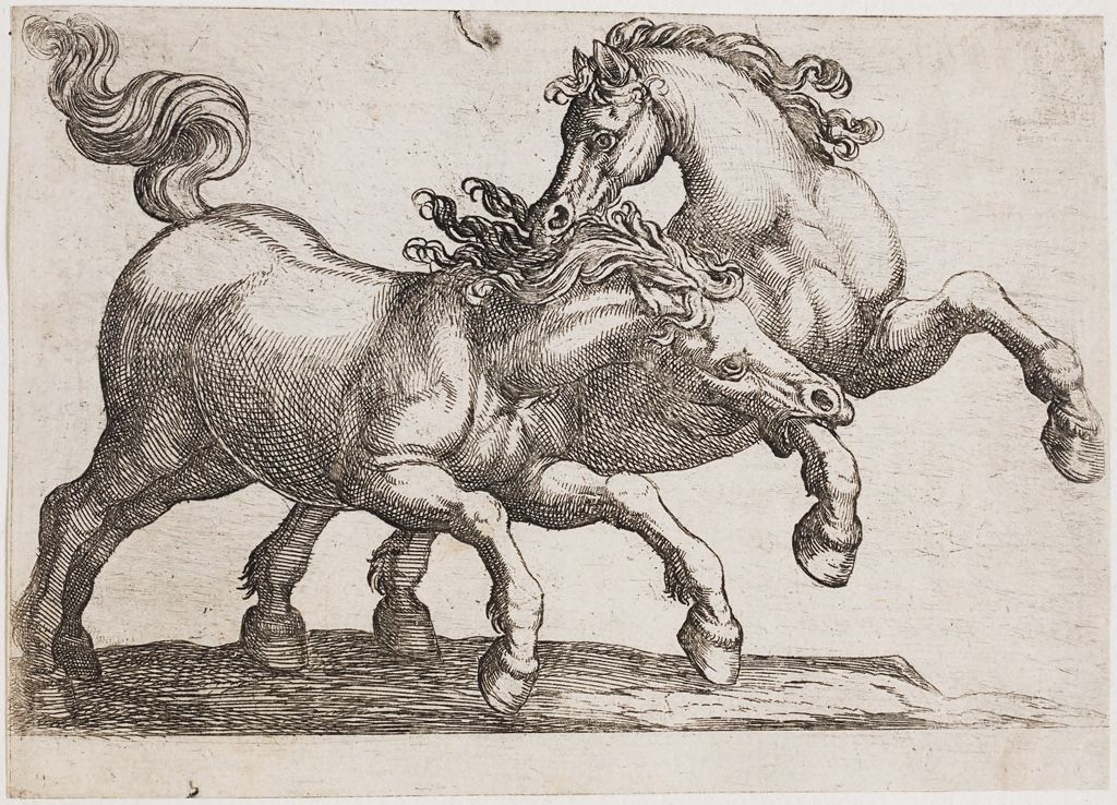 Two Horses Fighting