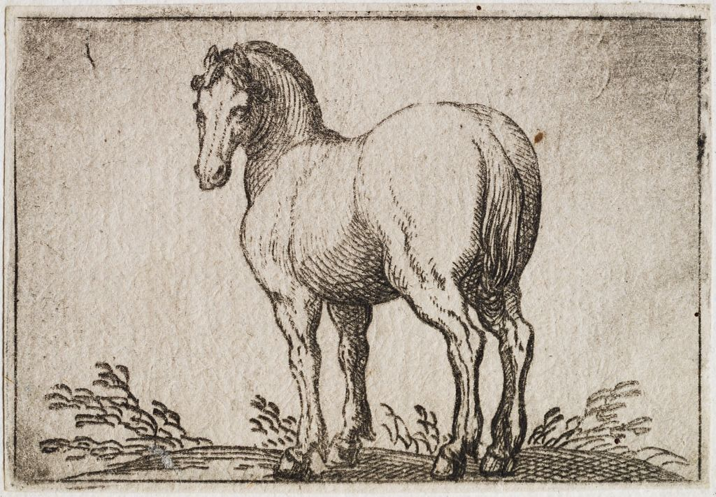 Standing Horse Viewed From The Rear