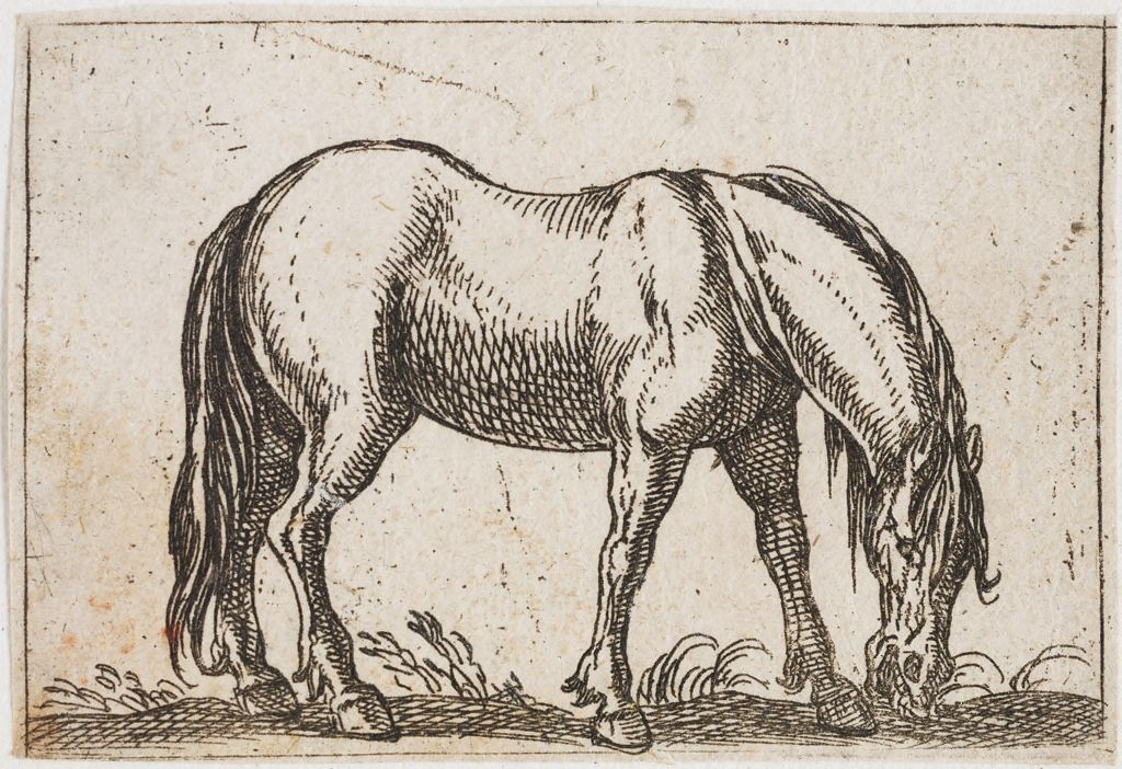 Grazing Horse, Facing Right