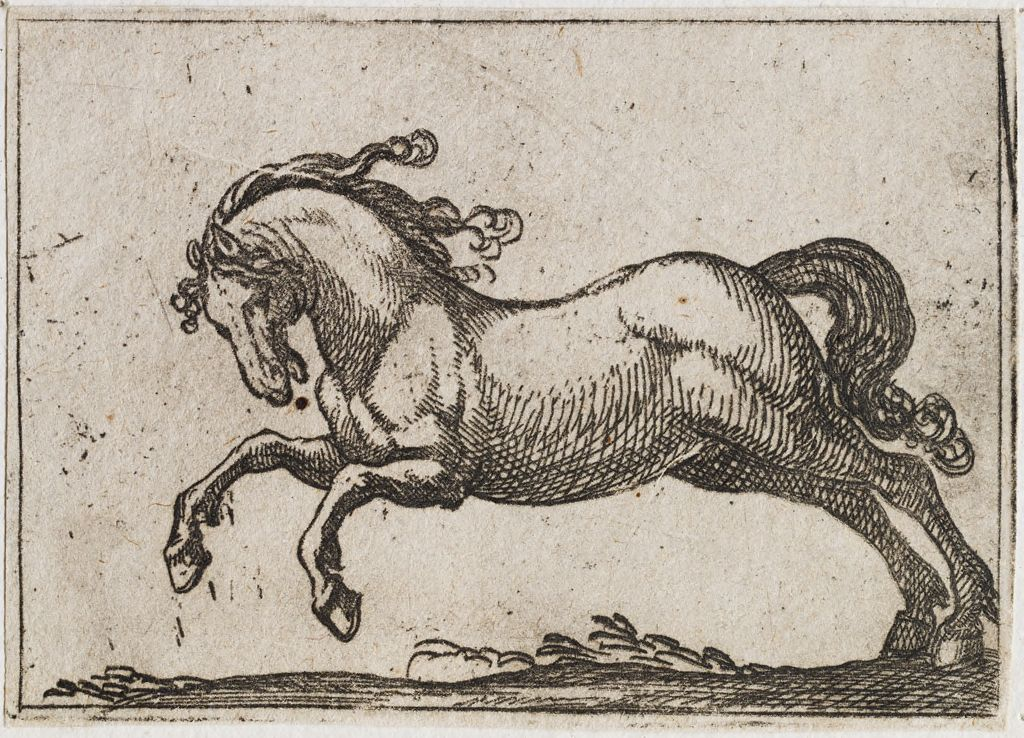 Horse Galloping To The Left