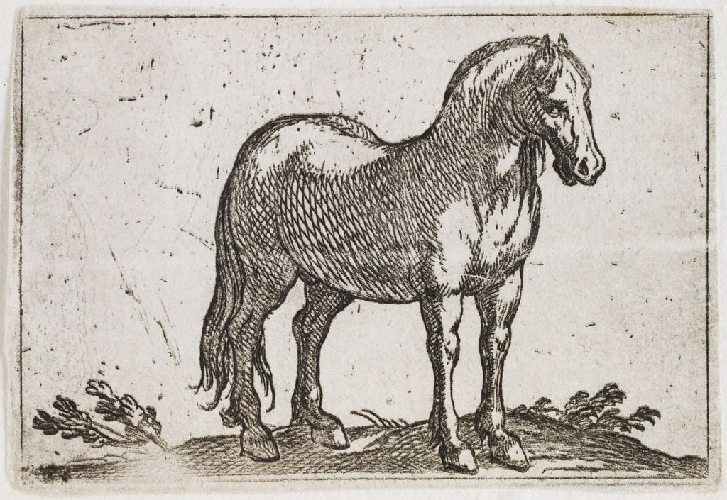 Standing Horse Viewed At A Three Quarter Angle