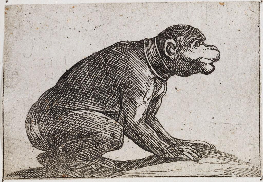 Squatting Monkey