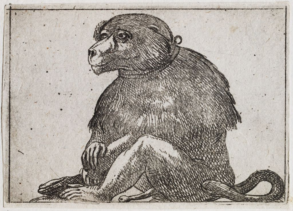 Seated Primate