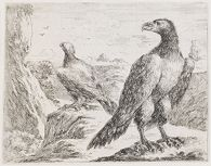 An Eagle, His Head Turned to the Left, with Another Eagle in the Background Watching Two Birds in Flight