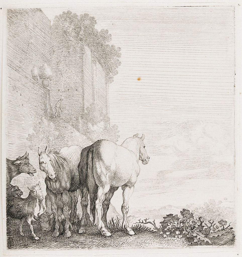 Horses Standing By A Wall