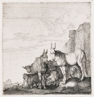 Donkeys near a Wall