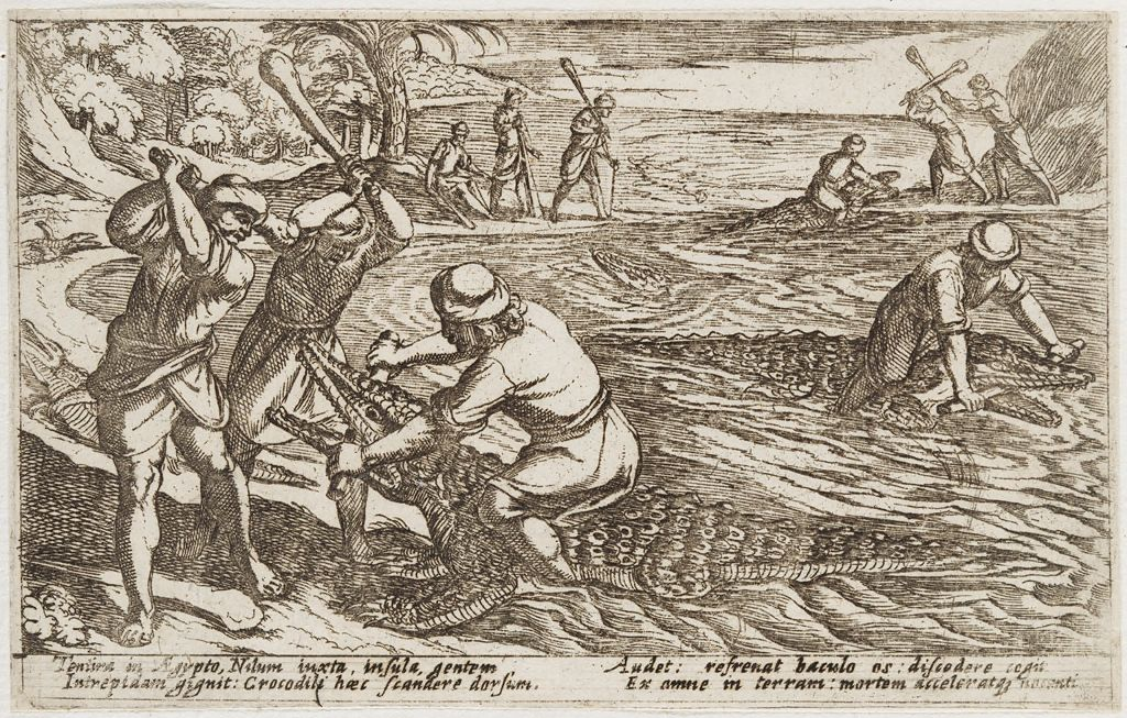 Hunters Capturing And Killing Crocodiles