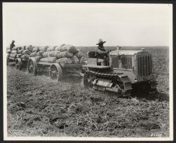 """Caterpillar"" Fifteen hauling potatoes"