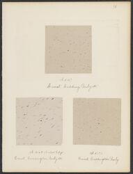 A 3167, A 3168, A 3171, Comet, Coddington Pauly etc. [3 photographs]