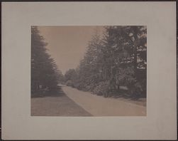[View of road and pine trees]
