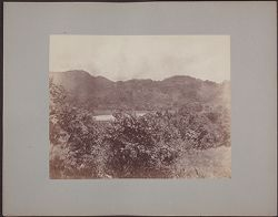 [View of trees with lake and mountains in background]
