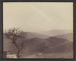 [View of mountains with tree in foreground]