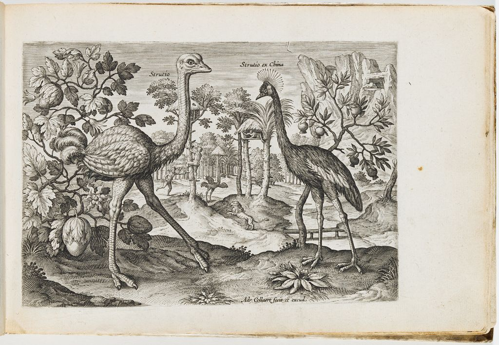 Album Of 16Th-Century Netherlandish Prints And Drawings