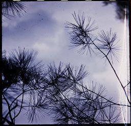 [Tree Branches]