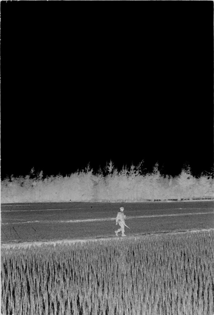 Untitled (Soldier Walking Through Rice Paddies, Vietnam)