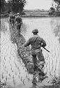 Untitled (Soldiers Walking Through Paddy Field, Vietnam)