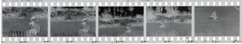 Untitled (Soldiers On Patrol In Rice Paddy, Vietnam)