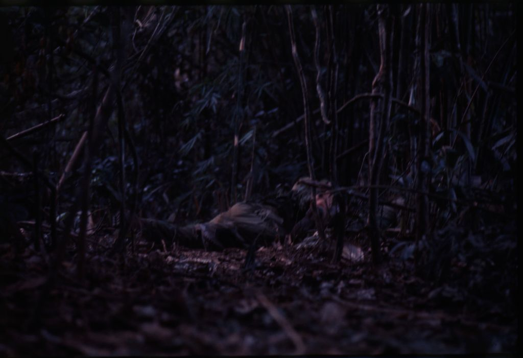 Untitled (Camouflaged Soldiers During Fighting In Central Highlands Near Dak To, Vietnam)