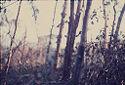 Untitled (Jungle, Central Highlands Near Dak To, Vietnam)
