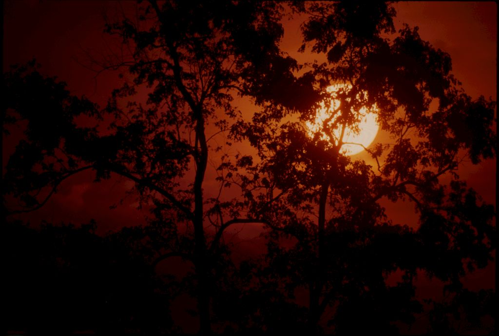Untitled (Trees Silhouetted Against Setting Sun, Vietnam)