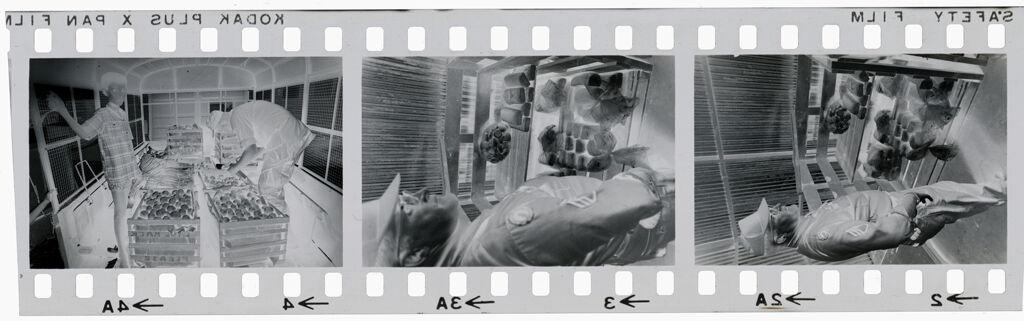 Untitled (Soldiers Examining Food Supplies, Vietnam)