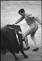 Untitled (Matador Waving Cape In Front Of Bull)