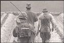 Untitled (Soldiers On Patrol Walking Through Rice Paddy, Vietnam)