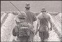 Untitled (Soldiers On Patrol Walking Through Rice Paddy, Vietnam)