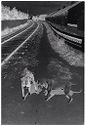 Untitled (Two Dogs By Railroad Track, Nazaré, Portugal)