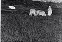 Untitled (Woman With Two Cows In Grassy Field; Overturned Umbrella In Background, Nazaré, Portugal)