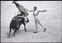 Untitled (Matador Drawing Cape Over Bull)