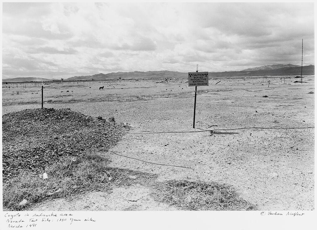 Coyote In Radioactive Area, Nevada Test Site: 1350 Square Miles, Nevada