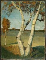 Birch Tree In A Landscape