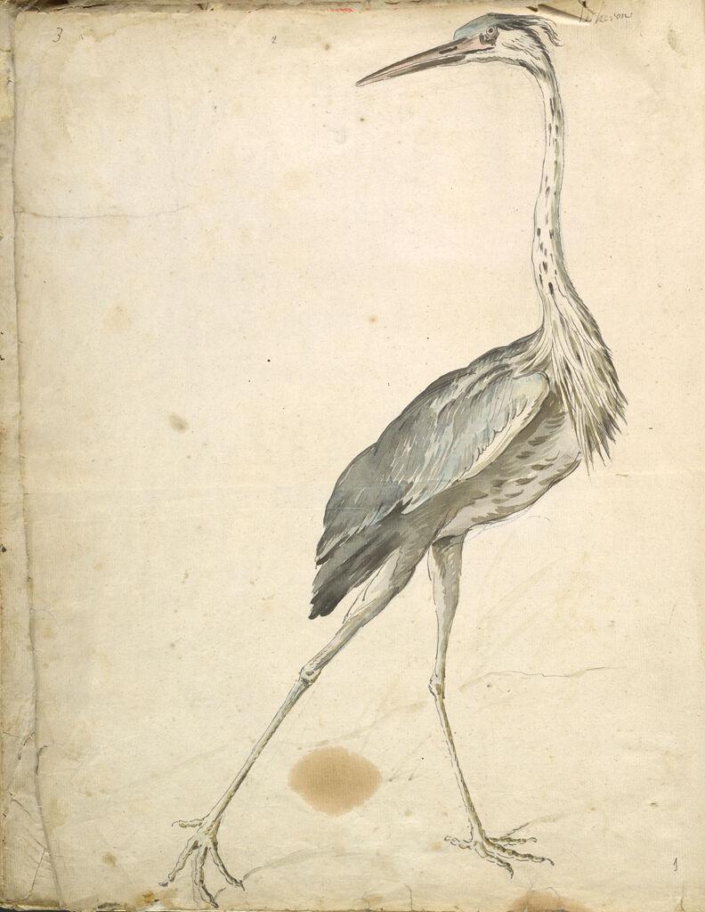 Folio Recto: Blank; Verso: Heron