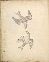 Folio Recto: Blank; Verso: Two Swallows In Flight