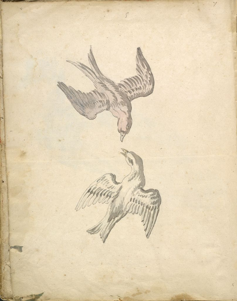 Folio Recto: Blank; Verso: Two Swallows In Flight