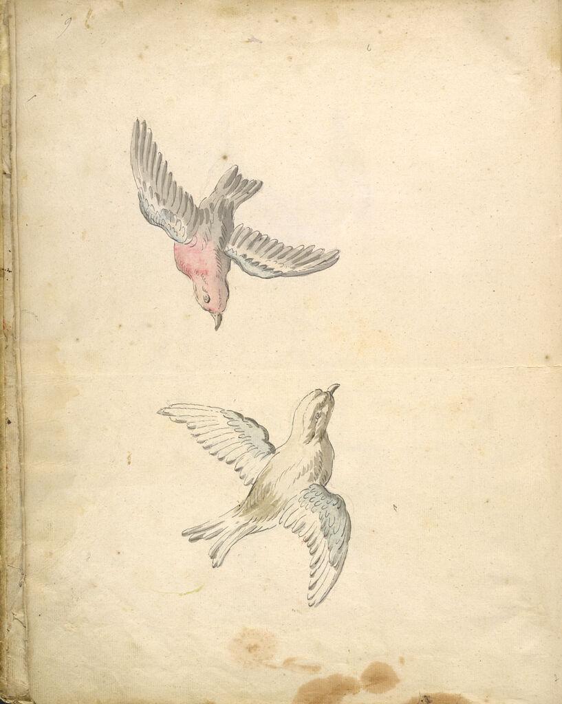 Folio Recto: Blank; Verso: Two Sparrows In Flight