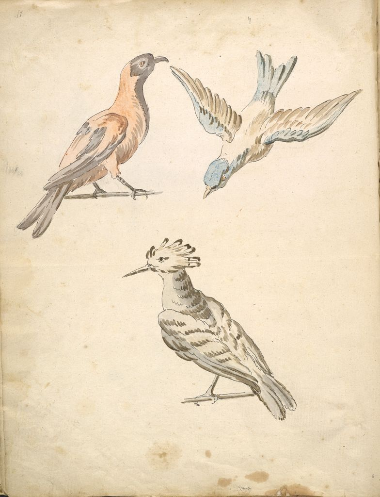 Folio Recto: Blank; Verso: Perched Magpie, Perched Woodpecker, And A Bird In Flight