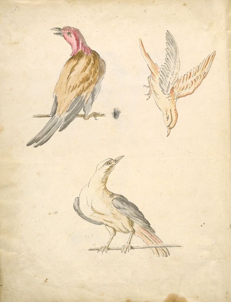 Folio Recto: Blank; Verso: Two Perched Birds And One In Flight