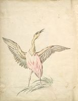 Folio Recto: Blank; Verso: Standing Bird With Wings Outspread