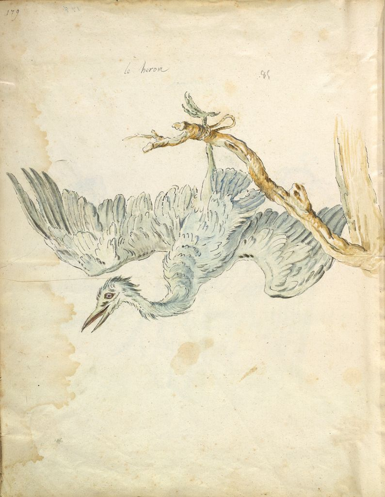 Folio Recto: Blank; Verso: Heron Tied To A Branch