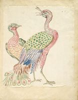 Two Peacocks; Verso: Blank