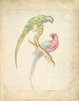 Two Parrots Perched On A Branch; Verso: Blank